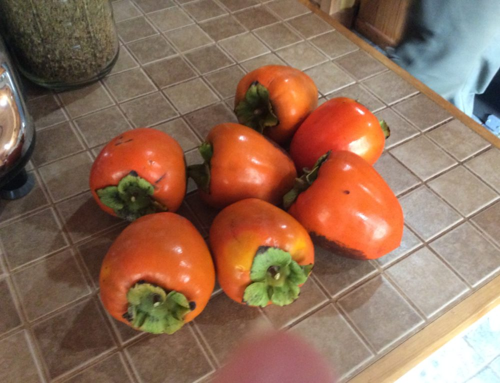 My very first persimmons are almost ripe!!
